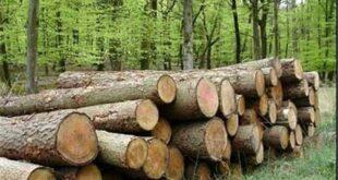 توقیف محموله بزرگ چوب قاچاق