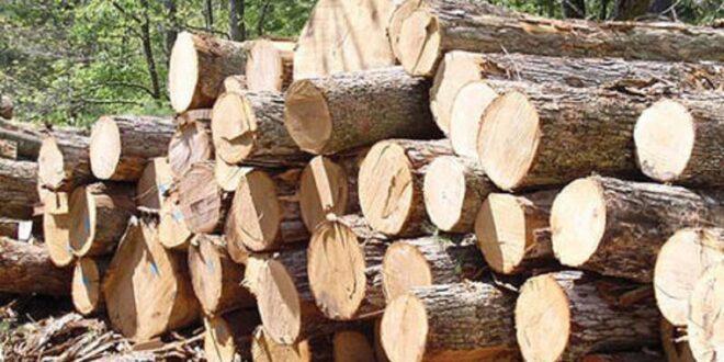 کشف ۹ تن چوب قاچاق در استان البرز