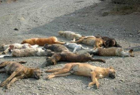 تصویر سگ کشی در ساوجبلاغ