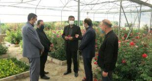 تولید بالغ بر 60 هزار بوته انواع گل و گیاه در گلخانه های شهرداری هشتگرد